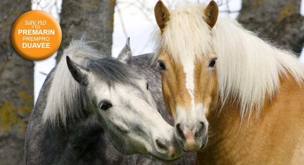 Two Belgian Horses. Say No to Premarin, Prempro and Duavee button.