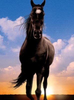Image of horse that appears on Flicka the movie poster.