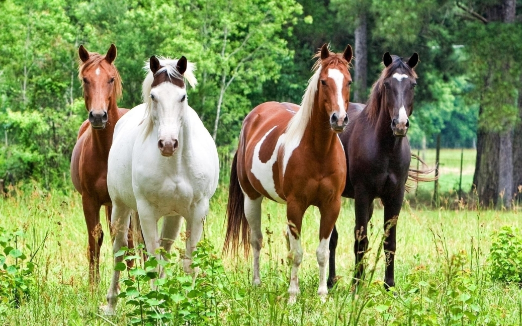 Four Horses. Unattributed photo. Google search result.