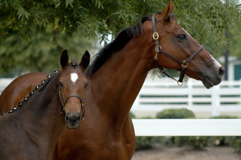 Thoroughbred Mare and Foal by Alicia Frese (c) Flint Gallery.