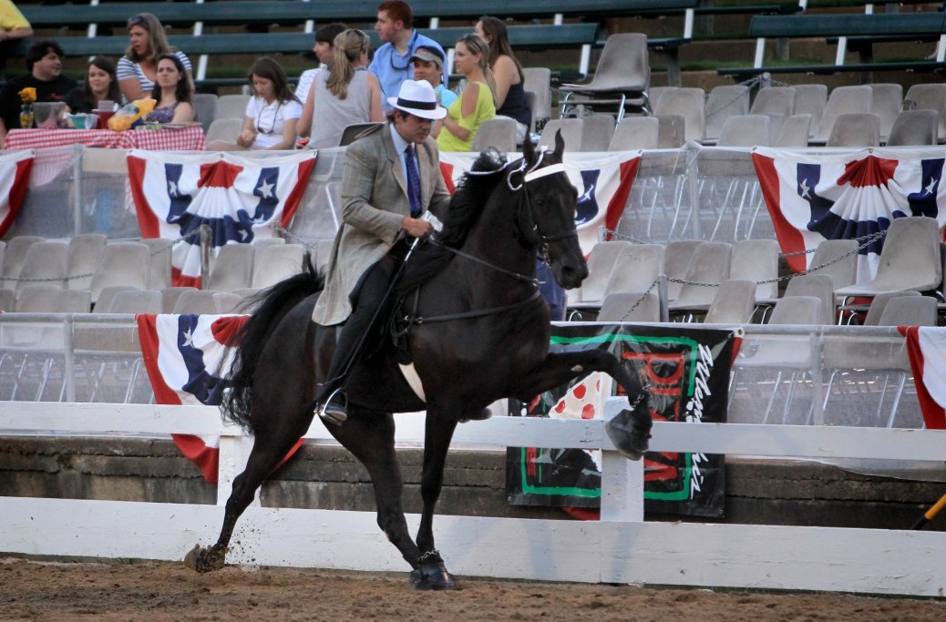 "June 6, 2012 - Southern Serenity Ranch Tennessee Walking Horse ""Walk Hard"" is shown by Patrick Thomas at the Germantown Charity Horse Show Wednesday evening. ""Walk Hard"" was thoroughly inspected by SHOW inspectors before entering the ring to ensure there is no evidence of any kind of soring with any of the horses. (The Commercial Appeal/ Nikki Boertman)"