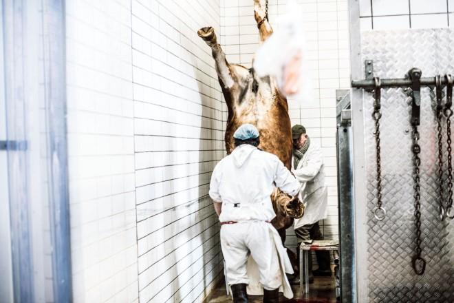 0000Het-paard-wordt-nadat-het-gedood-is-naar-de-slachtruimte-gehezen