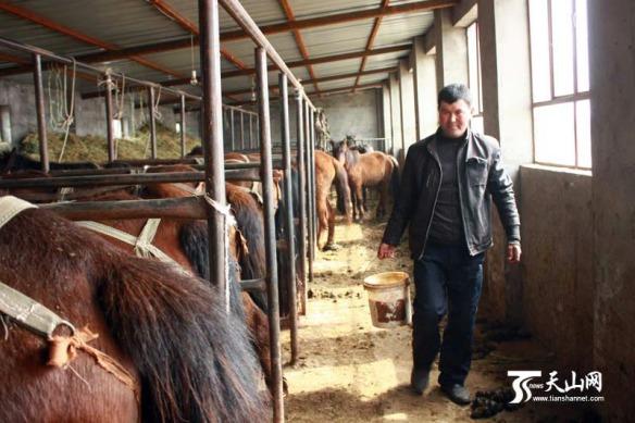 000pmu_horses_china_v5
