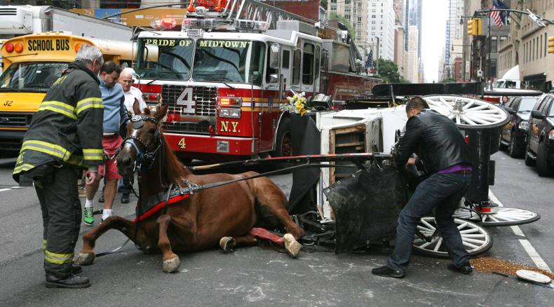CH3-carriage-horse-chris-breaks-leg-nyc-2