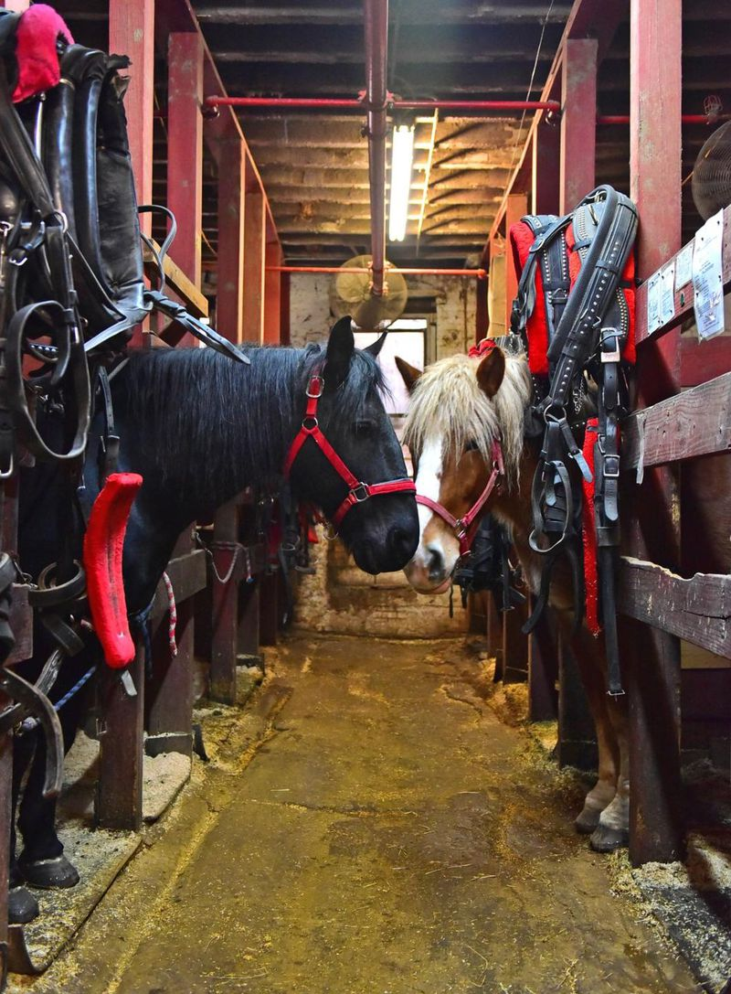 The owners of horse stables on Manhattan's West Side have no intention of selling and cashing in. (Louis Lanzano/for New York Daily News). Jan 20, 2016.