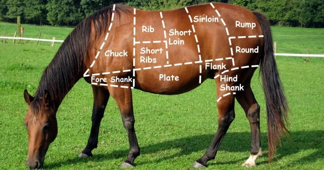 HM2-horse-meat-cuts-outlined-on-horse