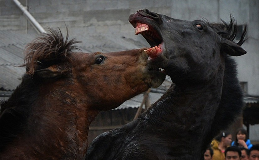 Horse Fighting Images
